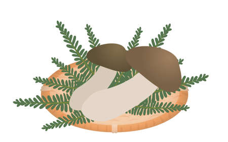 Illustration of Matsutake, the taste of autumn