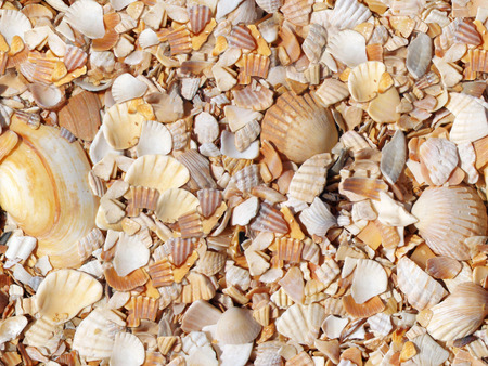 uninterrupted: seashells seamless pattern