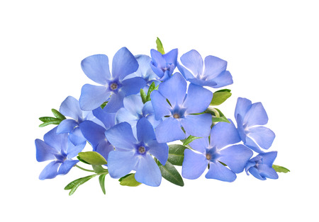 spring bright violet wild periwinkle flowers bouquet isolated on white background Archivio Fotografico