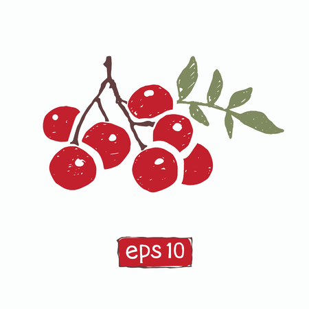 vector handdrawn branch of red rowan mountain ash berries isolated on white background