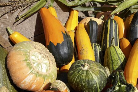 Many different pumpkins for sale on trailer. Stock Photo - 12125444
