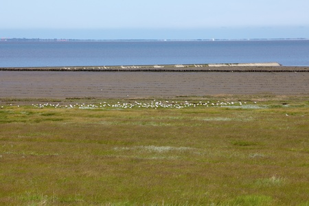 salt marsh: The North German Wadden Sea and nature reserve near Neuharlingersiel