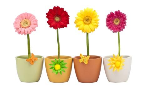 Four gerbera flowers in flower pot photo