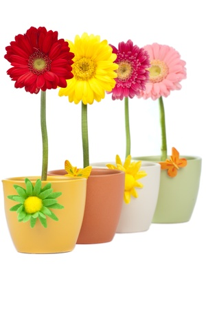 Four gerbera flowers in a row photo