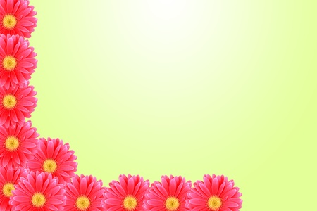 Background flower pink gerbera photo