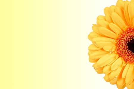 Modern background with large gerbera blossom