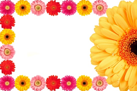 Modern background with Gerbera blossoms Stock Photo