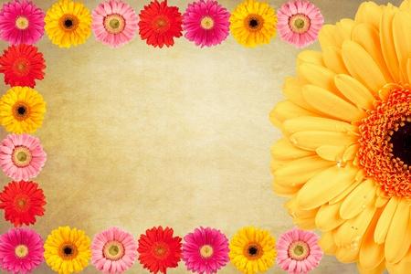 Gerbera flores de fondo antiguo