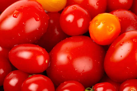 Colorful bunch of fresh organic tomato with water droplets photo