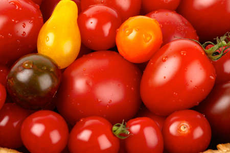 Colorful bunch of different varieties of organic tomatoes in a harvest photo