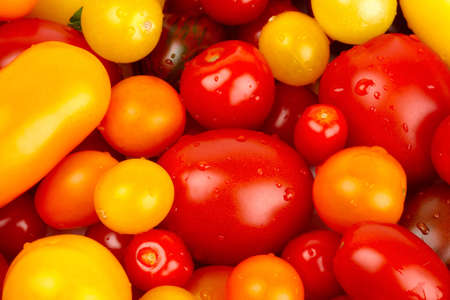 Colorful bunch of different varieties of organic tomatoes in a harvest Stock Photo