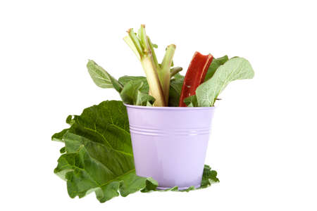 Rhubarb stalks in a pink metal bucket photo