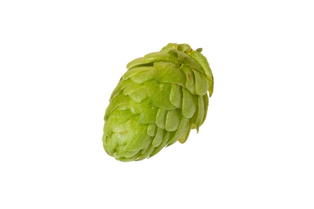 A single hops cone isolated on white background Stock Photo - 15295555