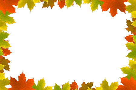 colorful maple trees: Autumn maple leafs background
