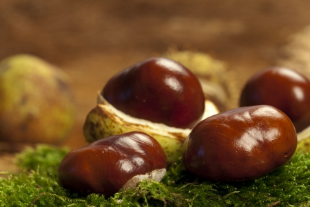 horse chestnuts: Some Horse chestnuts on green moss