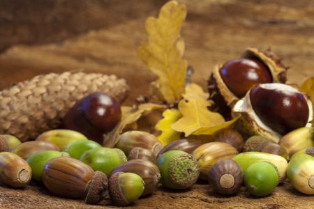 Autumn background of chestnuts, acorns, pine cone and colorful foliage photo
