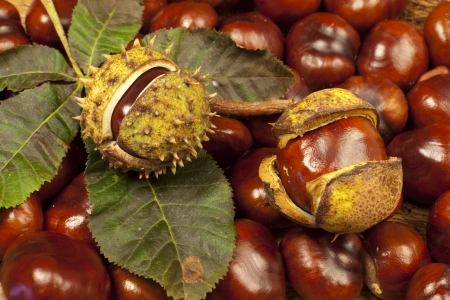 horse chestnuts: Background from many horse chestnuts