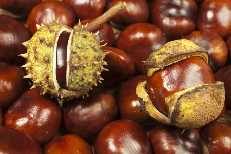 Background from many horse chestnuts