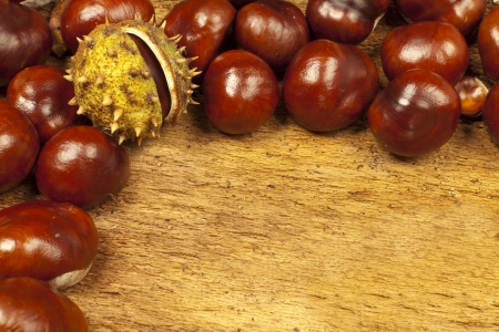 horse chestnuts: Background from many horse chestnuts with Copy space