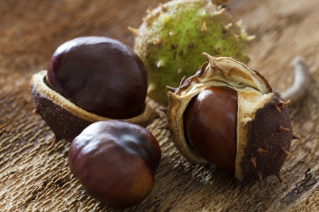 horse chestnuts: Some horse chestnuts on barks background