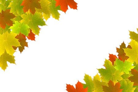 Colorful maple leaves as a background isolated on white photo