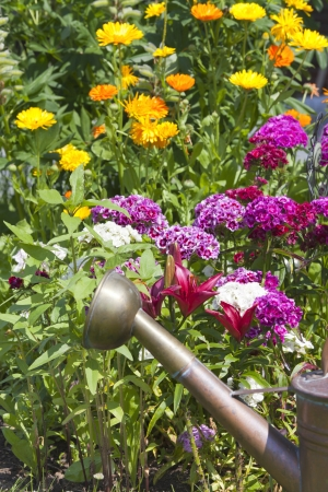 Summer flower bed with lilies, Sweet William and an old copper watering can photo