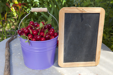 writable: A metal bucket filled with freshly picked cherries from the garden and a blank writeable slate board with copy space