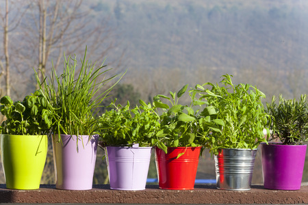 Fresh herbs in ceramic and metal pots on the balcony