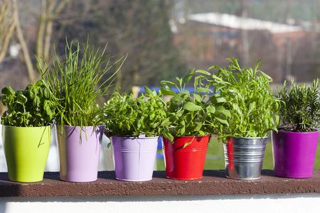 metales: Hierbas frescas en macetas de cerámica y metal en el balcón Foto de archivo