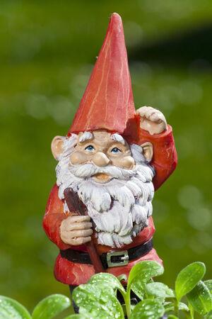 garden gnome: Little funny garden gnome in the garden behind small seedlings of herbs Stock Photo