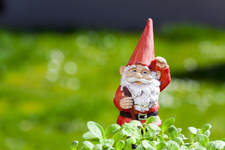 Little funny garden gnome is standing outside in the herb garden with copy space in the left area of the image Stock Photo