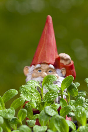 nain de jardin: Petit nain de jardin est derri�re plants de bourrache avec copie espace dans la zone sup�rieure de l'image