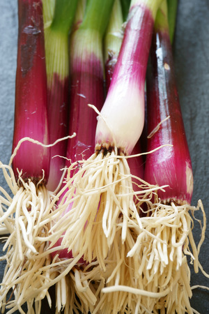 scallions: Close up of red scallions on a cutting board Stock Photo