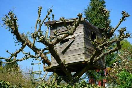 Homemade treehouse in an old fruit tree