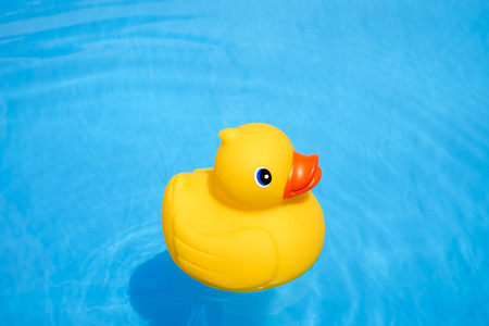 swimming bird: Yellow rubber duck in the home pool in the summer