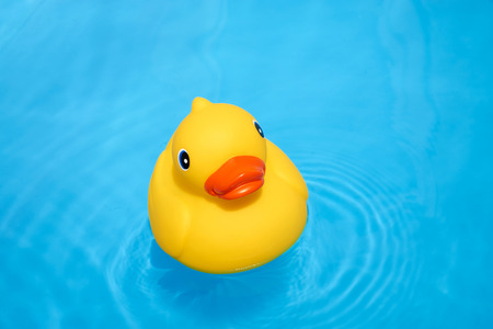 Yellow rubber duck in the home pool in the summer