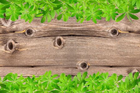 woodruff: Sweet woodruff leaves as Frame, top and bottom on old rustic wooden planks