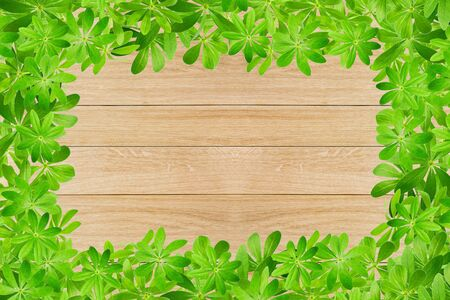 woodruff: Sweet woodruff leaves as Frame on wooden planks