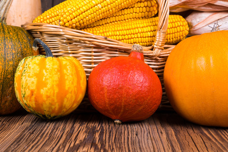 Autumn harvest festival pumpkins in front of a basket with corn cobs on a rustic wooden background
