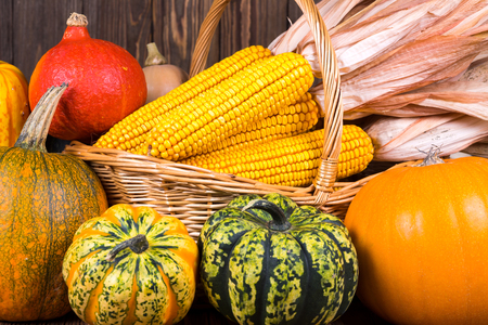 Decorative Thanksgiving motif with various pumpkins against a basket of corn cobs on a rustic wooden background Stock Photo