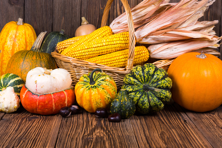 Autumn Thanksgiving motive with a basket full with corn cobs and different colorful pumpkins and chestnuts on an old rustic wooden background with copy space in the lower area