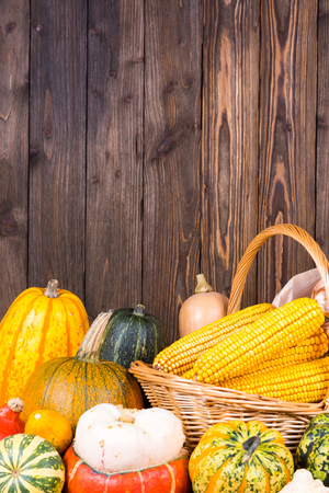 Autumn Thanksgiving motive with a basket full with corn cobs and different colorful pumpkins on an old rustic wooden background with copy space in the upper area of the picture