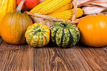 Autumn harvest festival motive with two different gorgonzola pumpkins and others in front of a basket with corn cobs on a rustic wooden background with copy space in the lower area of the picture