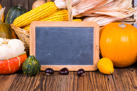 Autumn harvest festival motive with various pumpkins in front of a basket with corn cobs on a rustic wooden background with copy space on a slate board and in the lower area of the picture