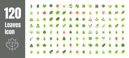 Spring and Autumn Leaf Flat Color Icon Set. Minimal Style Illustration Vector.
