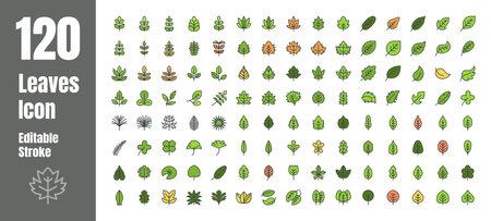 Spring and Autumn Leaf Filled Flat Color Outline line Icon Set. Minimal Style Illustration Vector. Editable Stroke