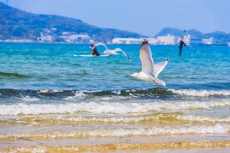 Fresh summer blue sky, sandy beaches and seagulls