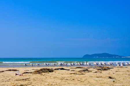 Fresh summer blue sky, sandy beaches and seagulls Imagens
