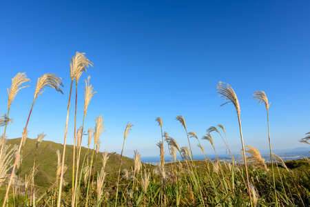 The refreshing blue sky of autumn and the susuki of the meadow (Fukuoka Prefecture)
