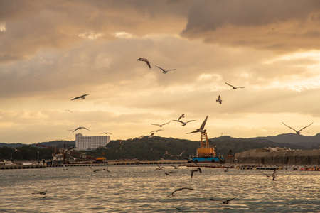 Seagulls flying around The Port of Bellzaki at dusk 写真素材